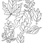 http—acoloringbook.com-wp-content-uploads-autumn-Autumn-coloring-pages-89