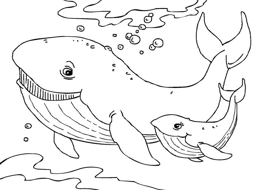 Humpback-Whale-Coloring-Page.jpg