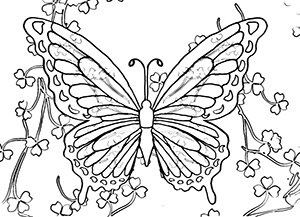butterfly image coloring pages - photo#45