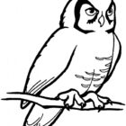 owls10