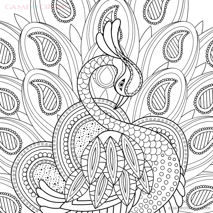 Peacock Coloring Kids