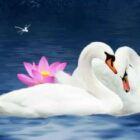 swansns