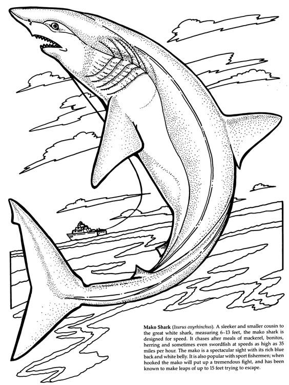 Shark Coloring Pages (1) - Coloring Kids