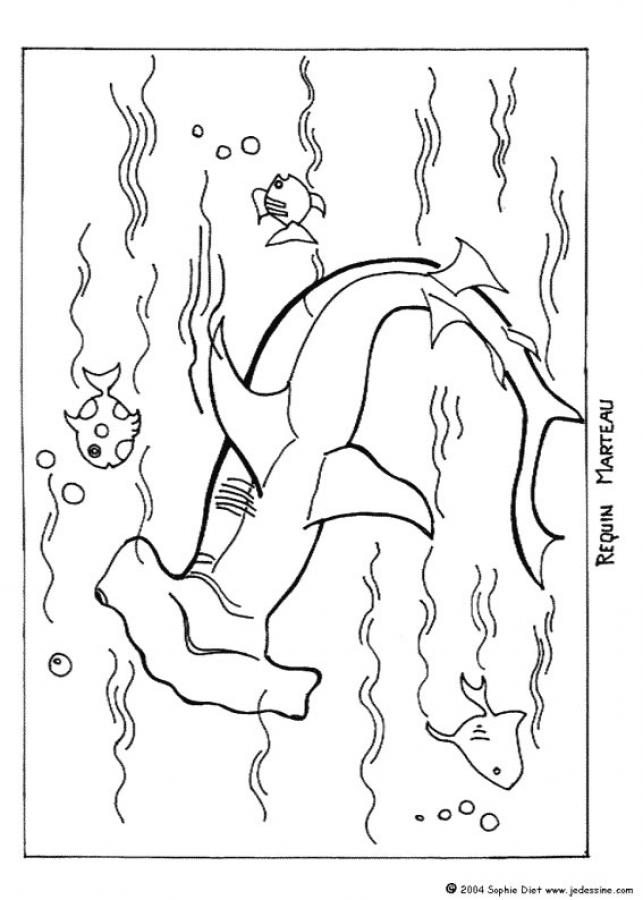 Shark Coloring Pages 17 Coloring