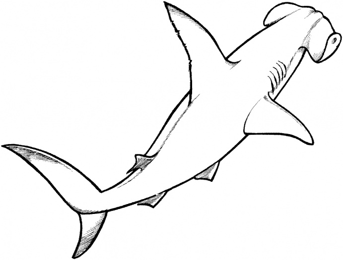Shark Coloring Pages 26  Coloring Kids