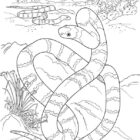 Snake Coloring Pages (10)
