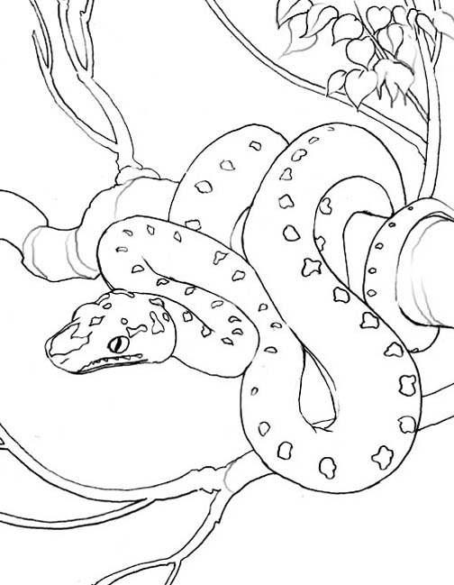 Snake Coloring Pages 12 Coloring Kids
