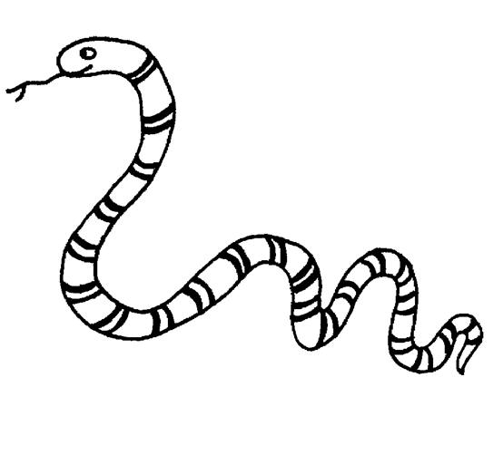 Snake Coloring Pages 13