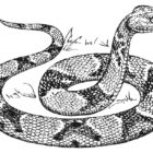 Snake Coloring Pages (9)