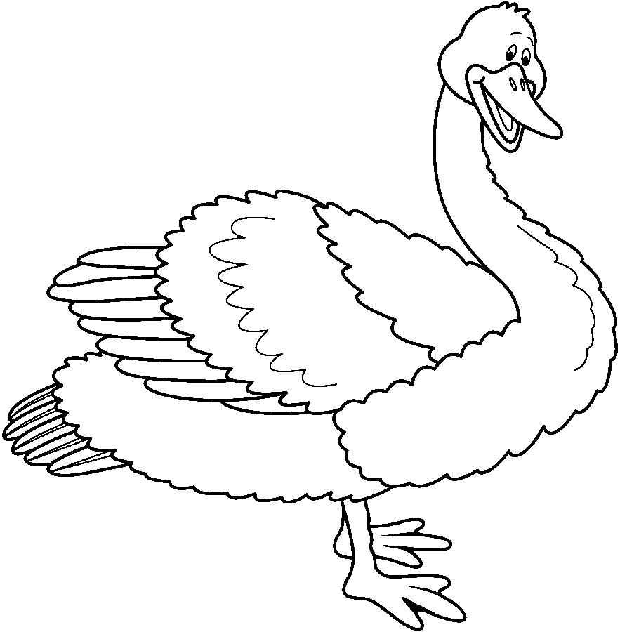 swan9
