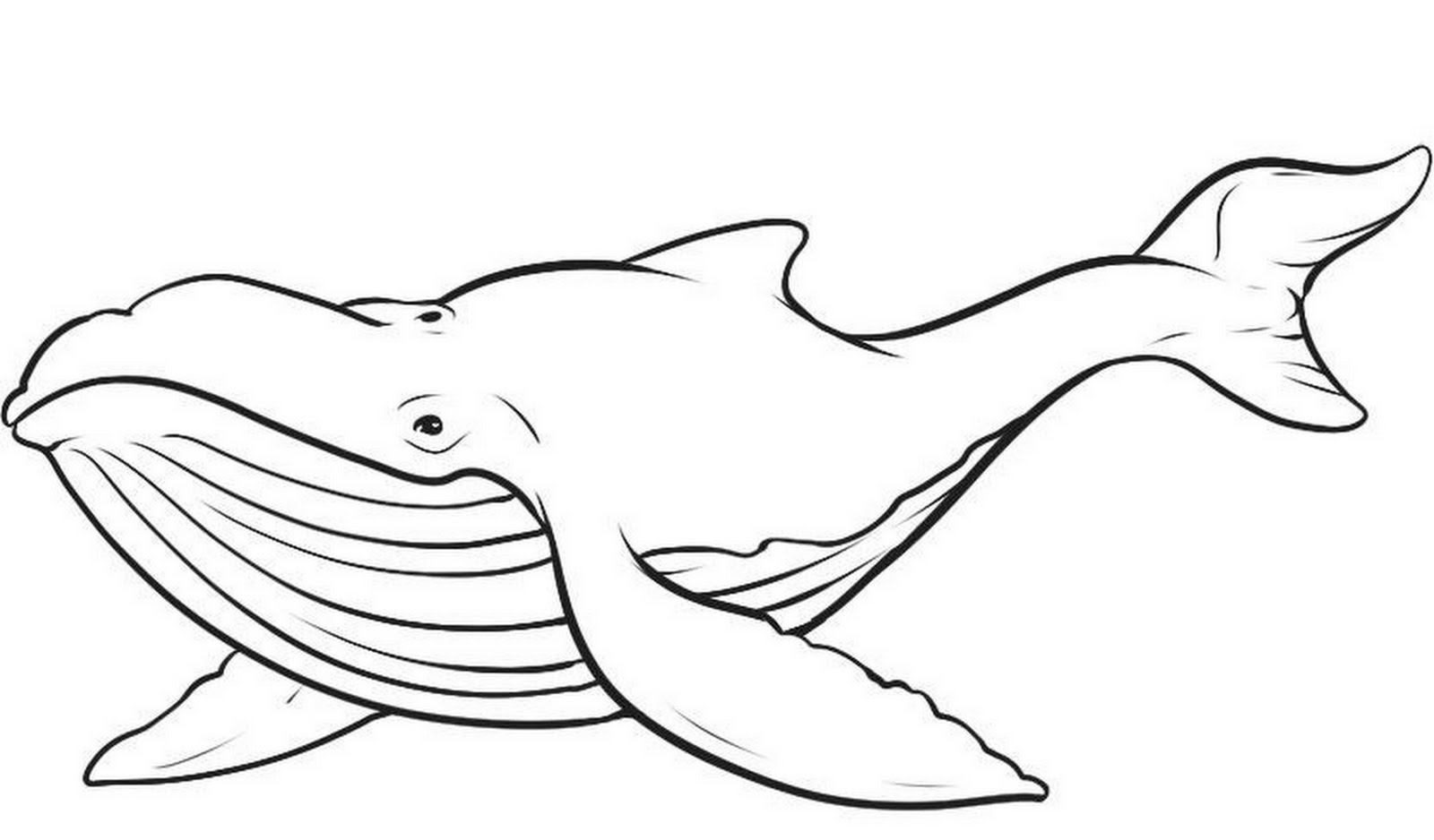Download Whale Coloring Pages