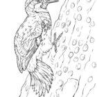 woodpecker-acorn