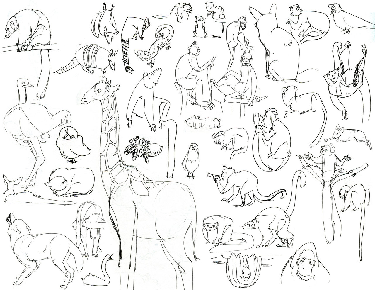 zoo coloring pages 7 coloring kids