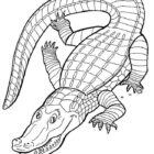 Crocodiles-coloring-page-9