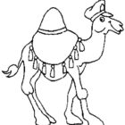 Dromedary-coloring-page-6