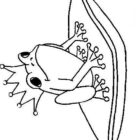 Frogs-coloring-book-57