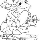 Frogs-coloring-book-84