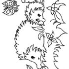 Hedgehogs-coloring-pages-12