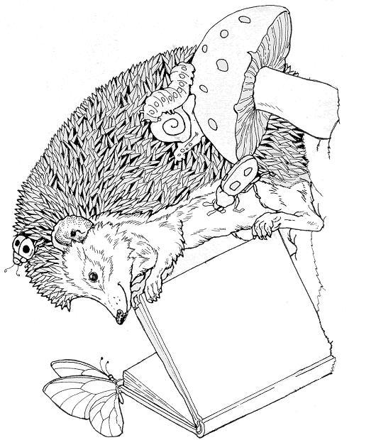 Hedgehogs-coloring-pages-23