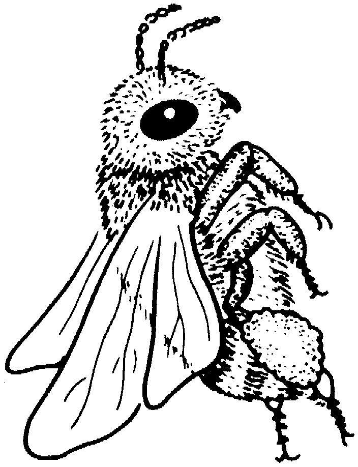 Insects-coloring-page-12