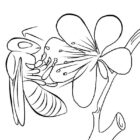 Insects-coloring-page-2