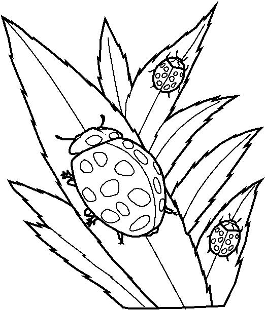 Insects-coloring-page-60