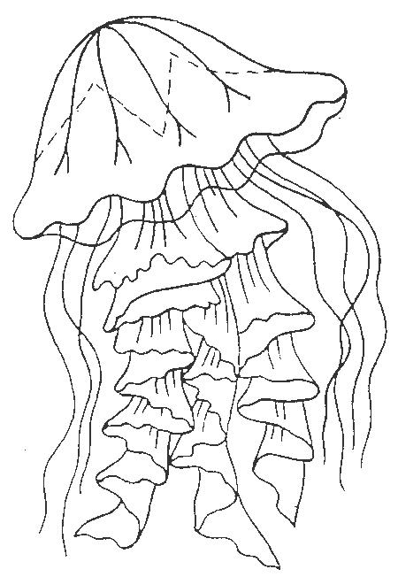 Jellyfish-coloring-page-1