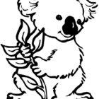Koala-coloring-page-6