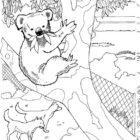 Koala-coloring-page-7