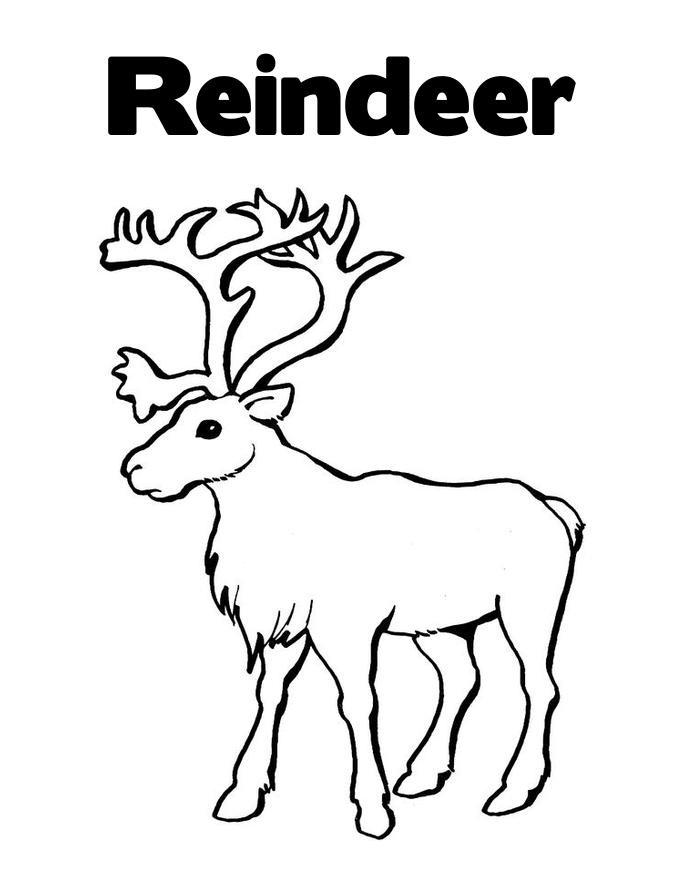 Reindeer Coloring Pages