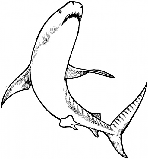 shark coloring pages 10 coloring kids