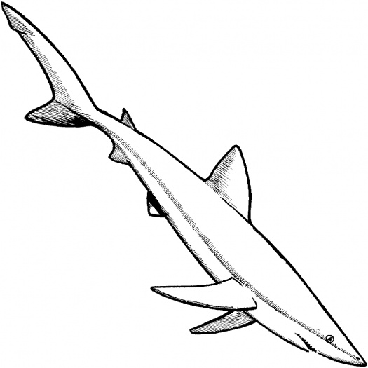 Shark Coloring Pages (2)