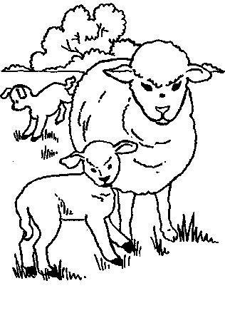 Sheep-coloring-page-35