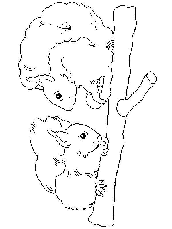 Squirrels-coloring-page-11
