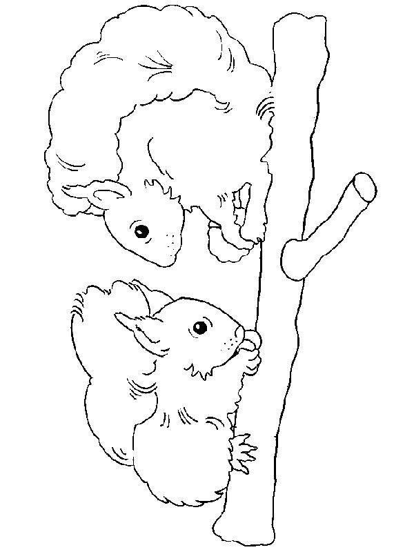 Squirrels-coloring-page-11