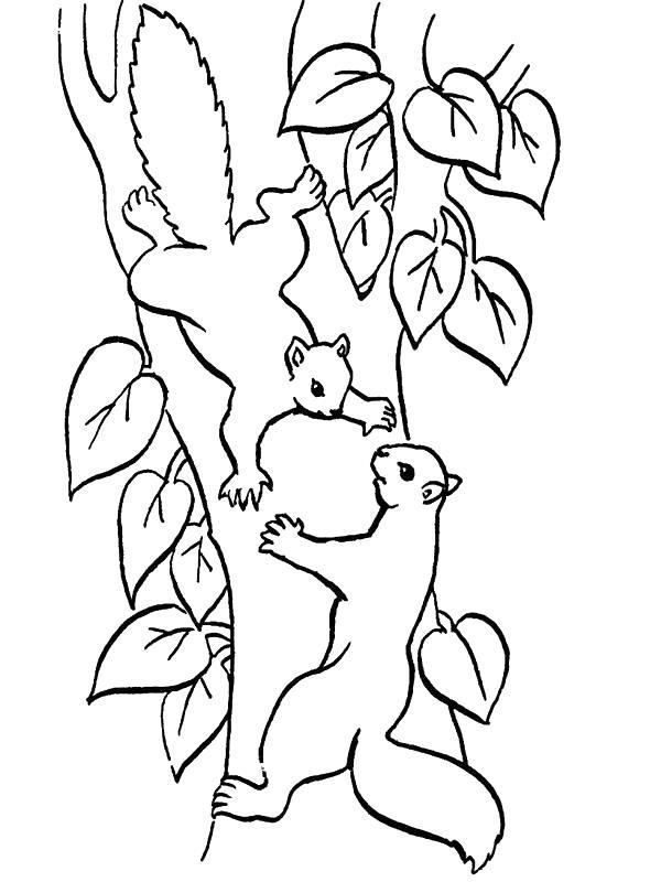 Squirrels-coloring-page-14