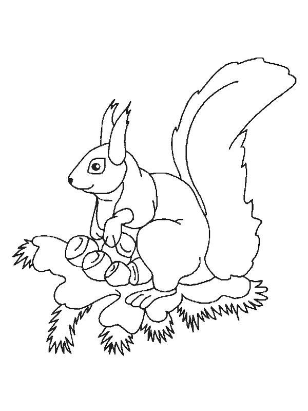 Squirrels-coloring-page-15