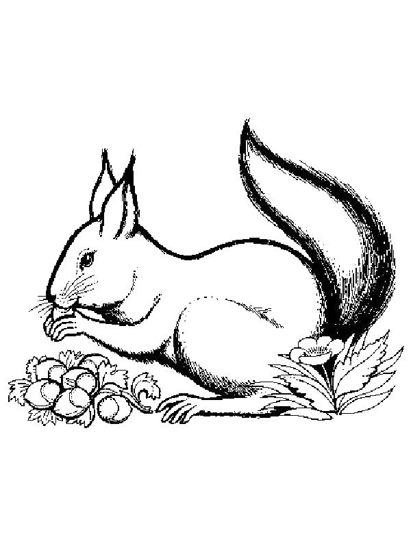 Squirrels-coloring-page-17