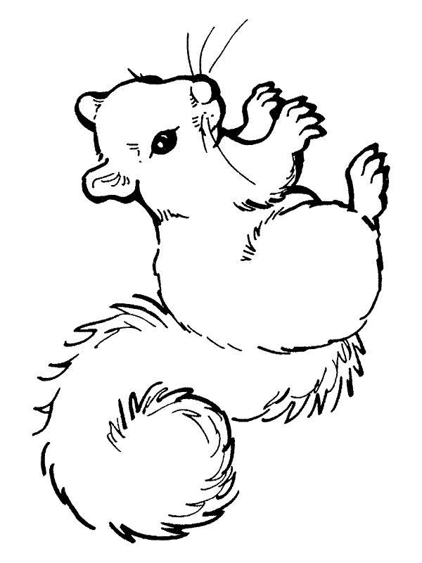 Squirrels-coloring-page-20