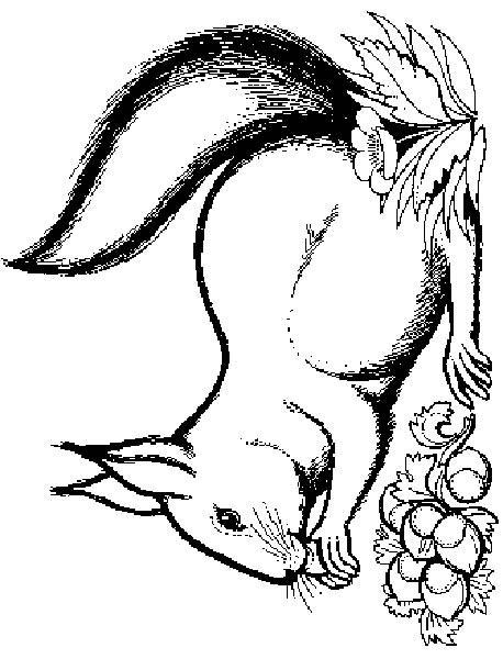 Squirrels-coloring-page-29
