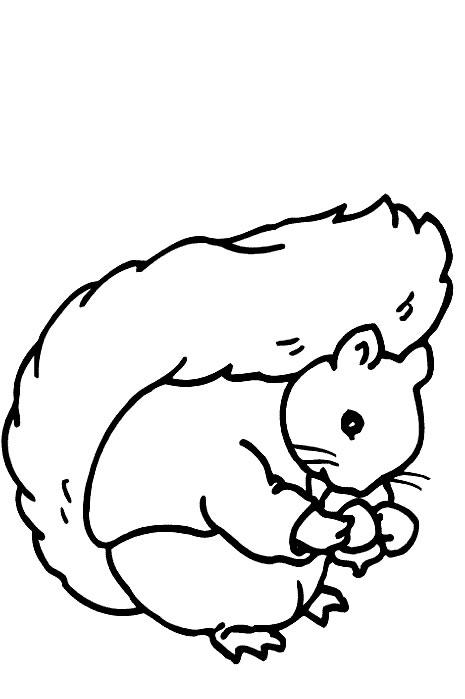 Squirrels-coloring-page-37