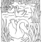 Swans-coloring-page-1