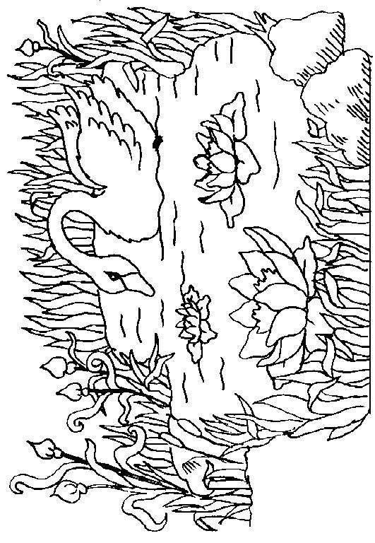 Swans-coloring-page-7