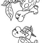 Turtles-coloring-book-24