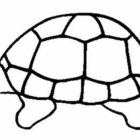 Turtles-coloring-book-4