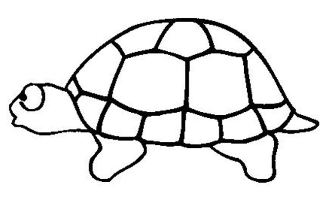 Turtles-coloring-book-4
