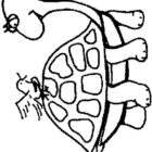 Turtles-coloring-book-7