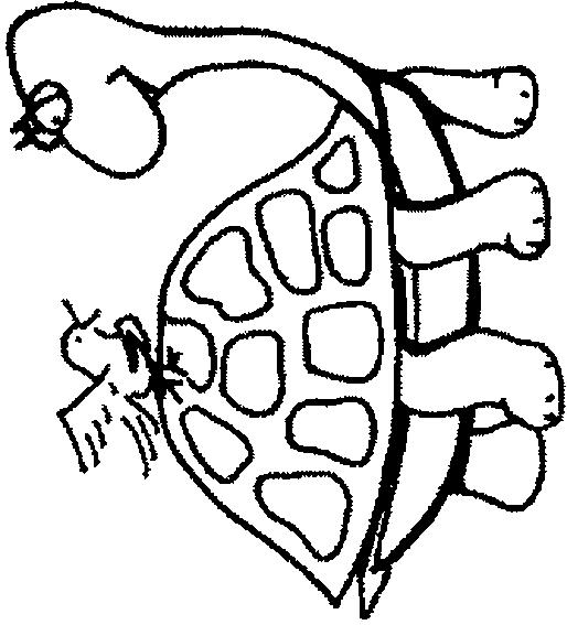 Turtles-coloring-book-7