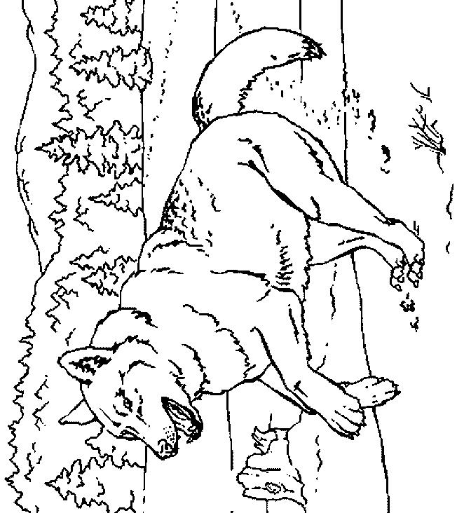 Wolves-coloring-page-15