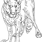 Wolves-coloring-page-5